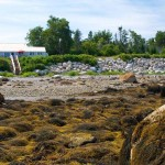 Brooklin-Cottage-Low-Tide