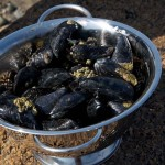 Brooklin-mussels