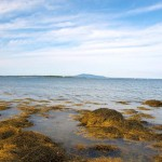 Cottage-beach-view-low-tide